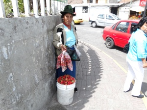 A Quechua woman selling strawberries, one of dozens who come into Quito every day to seek produce