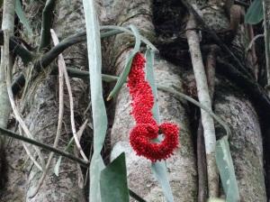 A heart-shaped surprise