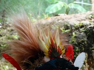 Birds of Paradise feathers are among the most prized in the headdresses of the Wigmen